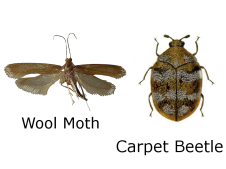 Moth and Beetle